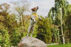 Poursuivez sauter de la grande pierre jouant au parc Photo libre de droits