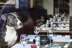 Poursuivez se reposer dans un restaurant attendant pour être occupé images stock