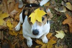 Poursuivez se reposer sur l'herbe avec la feuille d'érable sur sa tête Photos libres de droits