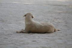 Poursuivez se reposer sur la plage, attendant des meilleurs amis en été de jour de relaxation Photos libres de droits