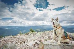 Poursuivez se reposer sur le dessus de la montagne photo libre de droits