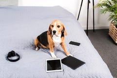 Poursuivez se reposer sur le lit avec les comprimés numériques, le smartphone et les écouteurs Photo stock