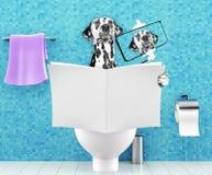Poursuivez se reposer sur un siège des toilettes avec la magazine ou le journal de lecture de problèmes ou de constipation de dig Images libres de droits
