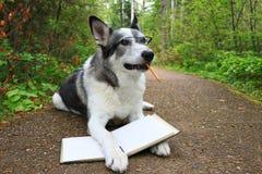 Poursuivez tenir un livre avec un crayon dans sa bouche Images libres de droits