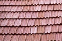Pousse avant de tuile de toit sous le ciel pluvieux images libres de droits