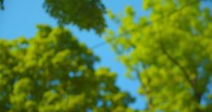 Pousse brouillée de belle nature verte d'arbres pendant la journée chaude d'été avec le foyer brouillé clips vidéos