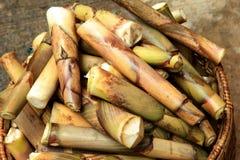 Pousse de bambou Images libres de droits