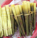 Pousse de bambou Photo libre de droits