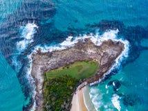 Pousse de bourdon au-dessus de l'océan images libres de droits