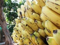 Pousse de groupes de banane photo libre de droits