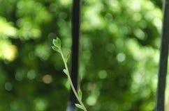 Pousse de petit cactus s'élevant dans le jardin photo libre de droits