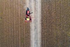 Pousse de récolte de soja de bourdon Photographie stock libre de droits