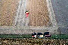 Pousse de récolte de soja de bourdon photo libre de droits
