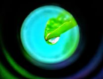 Pousse des feuilles je Image libre de droits