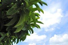 Pousse des feuilles l'arbre Photos libres de droits