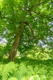 Pousse des feuilles l'arbre lumineux photographie stock