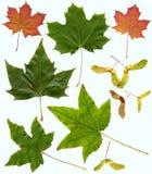 Pousse des feuilles l'assortiment Images stock