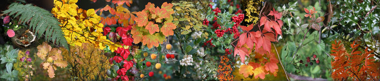 Pousse des feuilles la composition Photographie stock libre de droits