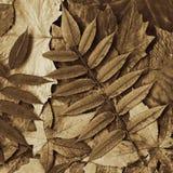 Pousse des feuilles la sépia Images stock