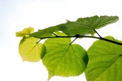 pousse des feuilles le ciel Photo libre de droits