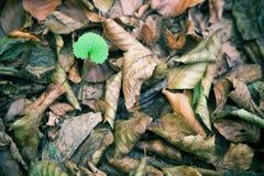 Pousse des feuilles le fond Photos libres de droits
