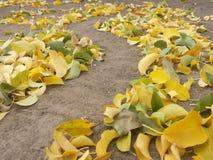 Pousse des feuilles le pach Image stock