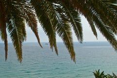 pousse des feuilles le palmier Photographie stock