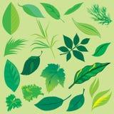 Pousse des feuilles le ramassage Image libre de droits