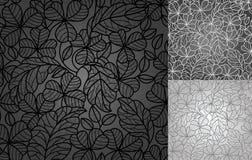 Pousse des feuilles le trèfle, fond de lacet Photographie stock