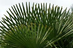 Pousse des feuilles tropical Images stock