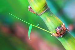 Pousse en bambou Photo libre de droits