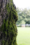 Pousse haute de vieille d'arbre fin de tronc avec de la mousse Image stock