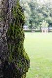 Pousse haute de vieille d'arbre fin de tronc avec de la mousse Photographie stock