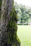 Pousse haute de vieille d'arbre fin de tronc avec de la mousse Photo stock