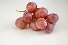 Pousse légère de pièce de raisin Image stock