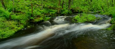 Pousse panoramique de courant traversant la forêt Photos stock