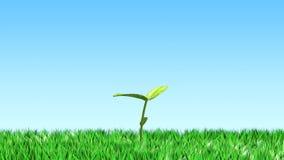 Pousse sur l'herbe Image libre de droits