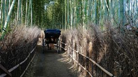 Pousse-pousse tiré dans le verger en bambou photos stock