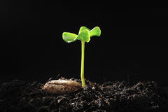 Pousse verte Photographie stock libre de droits