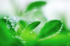 Pousse verte avec des gouttes de rosée image libre de droits