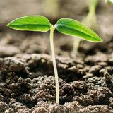 Pousse verte avec la feuille, élevage de feuilles Ressort, concept de la nouvelle vie Photos stock