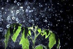 Pousse verte avec un pulvérisateur de l'eau autour Photographie stock