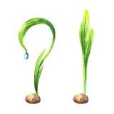 Pousse verte comme une question et la réponse illustration libre de droits