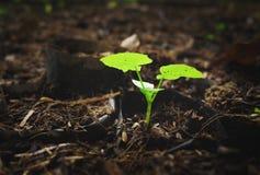 Pousse verte grandissant du sol Photographie stock