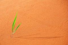 Pousse verte isolée Photographie stock libre de droits