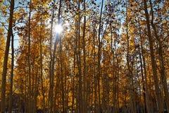Pousser le soleil Photos libres de droits