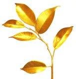 Pousses d'or. Image libre de droits