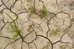 Pousses d'herbe sur le sol sec criqué Concept de sécheresse Image libre de droits