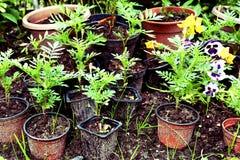 Pousses dans des pots sur le fond de sol d'été photos libres de droits