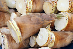 Pousses de bambou Photos libres de droits